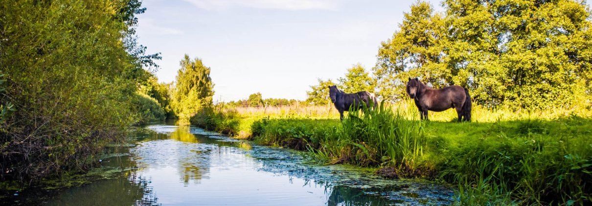 Ponys am Ufer